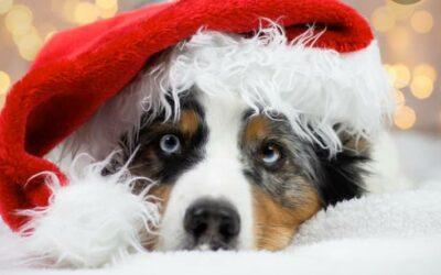 Wir wünschen allen schöne Weihnachten und ein erholsames fro…